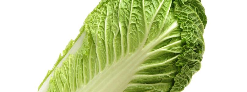 ecp_in_veg_lettuce